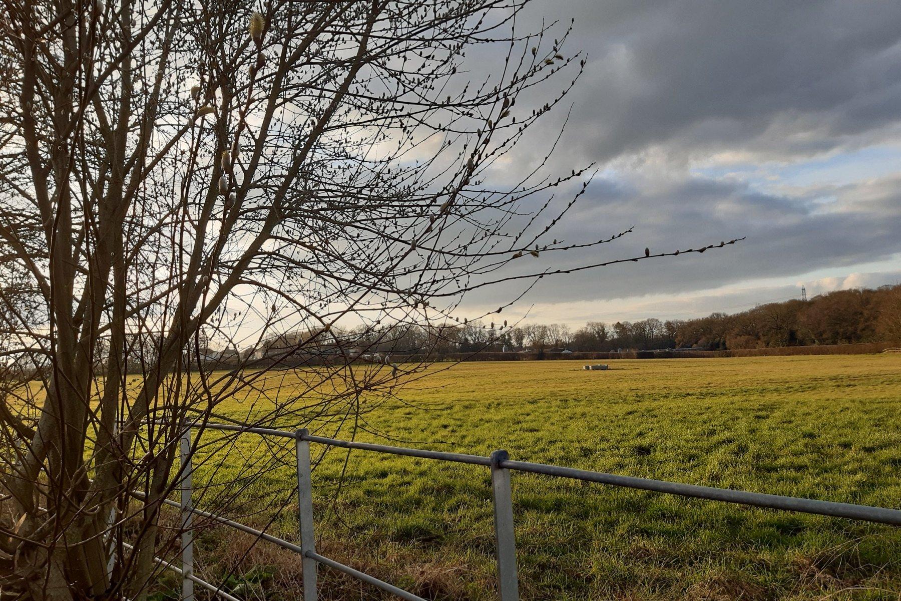 farm-girl-fields-holt-wimborne-shaftsbury